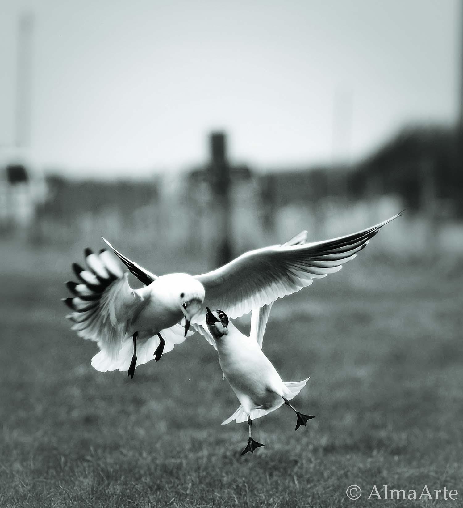 birds_secret_almaarte-2