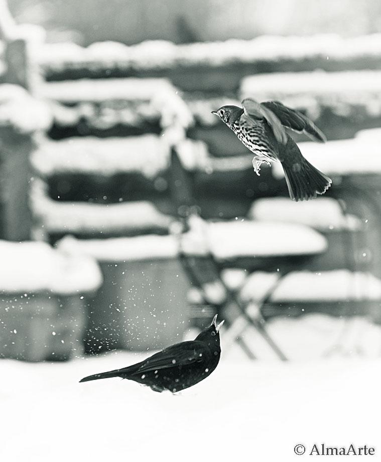 birds_snow_almaarte-3