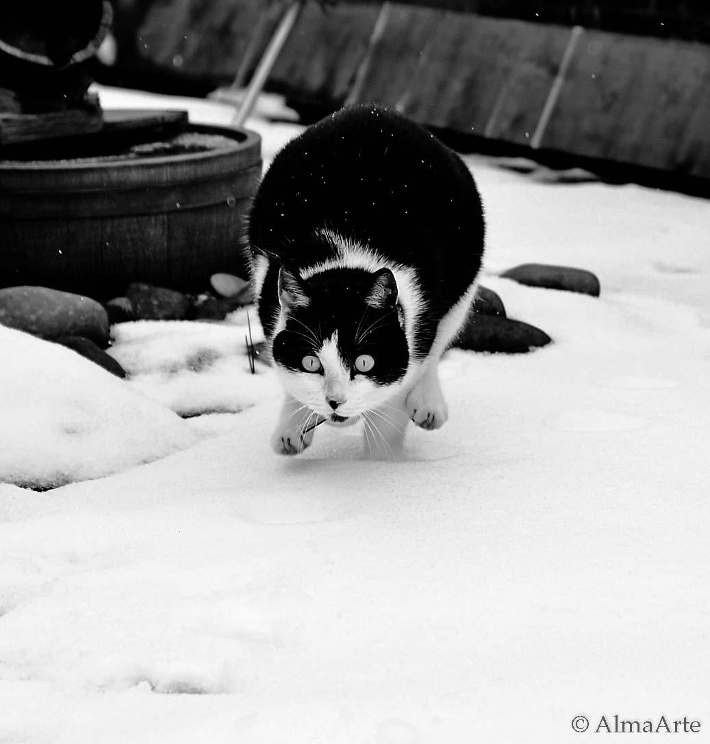 cat_almaarte-5