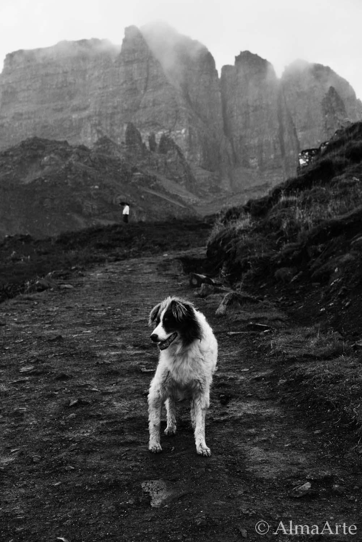 dog_mountain_almaarte-1