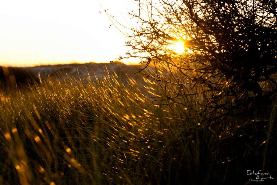 nature, naturaleza, sunset, atardecer, sun, sol plants, trees, arboles, bushes, matorrales, England, Inglaterra, UK