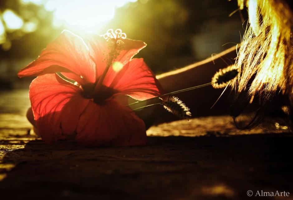 Natural World, sunset, natural light, sunset, atardecer, Alicante, Nature Images, Nature, Images, Photography, AlmaArte Photography, Manchester, Lancashire, UK, Spain, Natural, Light, Naturaleza, Flowers, Plants, Water, interesting, art, arte, artistic, arty