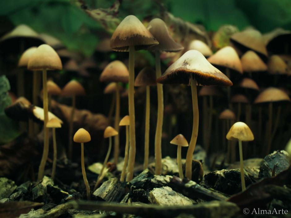 Natural World, setas, Nature Images, Nature, Images, Photography, AlmaArte Photography, Manchester, Lancashire, UK, Spain, Natural, Light, Naturaleza, Flowers, Plants, Water, interesting, art, arte, artistic, arty, mushrooms,
